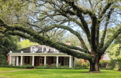 The older foliage, large trees, and familiar ranch style home is commonly seen in the Post War Suburbs and the Garden District.